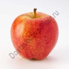 Яблоки Гала новый урожай 1кг