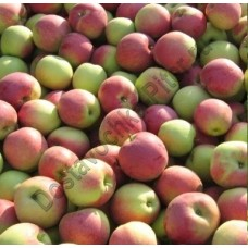 Яблоки ранние1кг