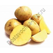 Картофель мытый 1кг
