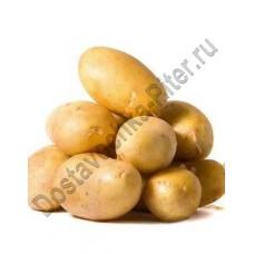 Картофель отборный упаковка 2,5кг