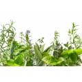 Набор для заваривания чая Солнечная сторона жизни 40г