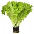 Салат в горшочке 1шт